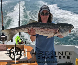 Striped bass fishing with Southbound Charters in CT