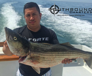 Big Striper caught on Southbound Charters