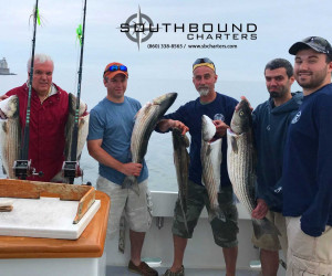 An early limit of Striped Bass aboard Southbound Charters