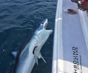 Mako shark fishing out of Waterford Connecticut with Southbound Fishing Charters