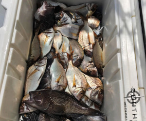 A great day of bottom fishing and hitting the Sea Bass and Porgy with Southbound Charters out of Waterford, CT