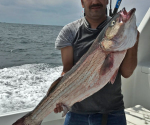 Big stripers getting landed with Southbound Fishing Charters out of Waterford, CT